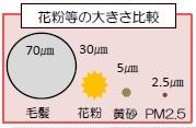 花粉などの大きさ比較.jpg