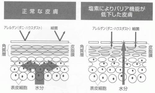 残留塩素の肌への影響 (2).jpg